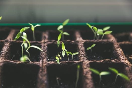 Solve Plant Disease
