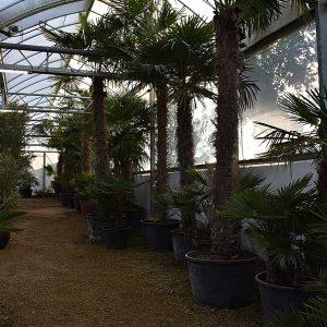 large range of palm trees