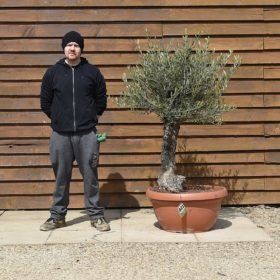 Gnarled Olive Tree in a Bonsai Bowl No. 601 Left Side