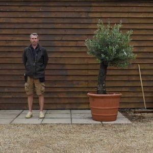 potted mini gnarled olive tree 548 (1)