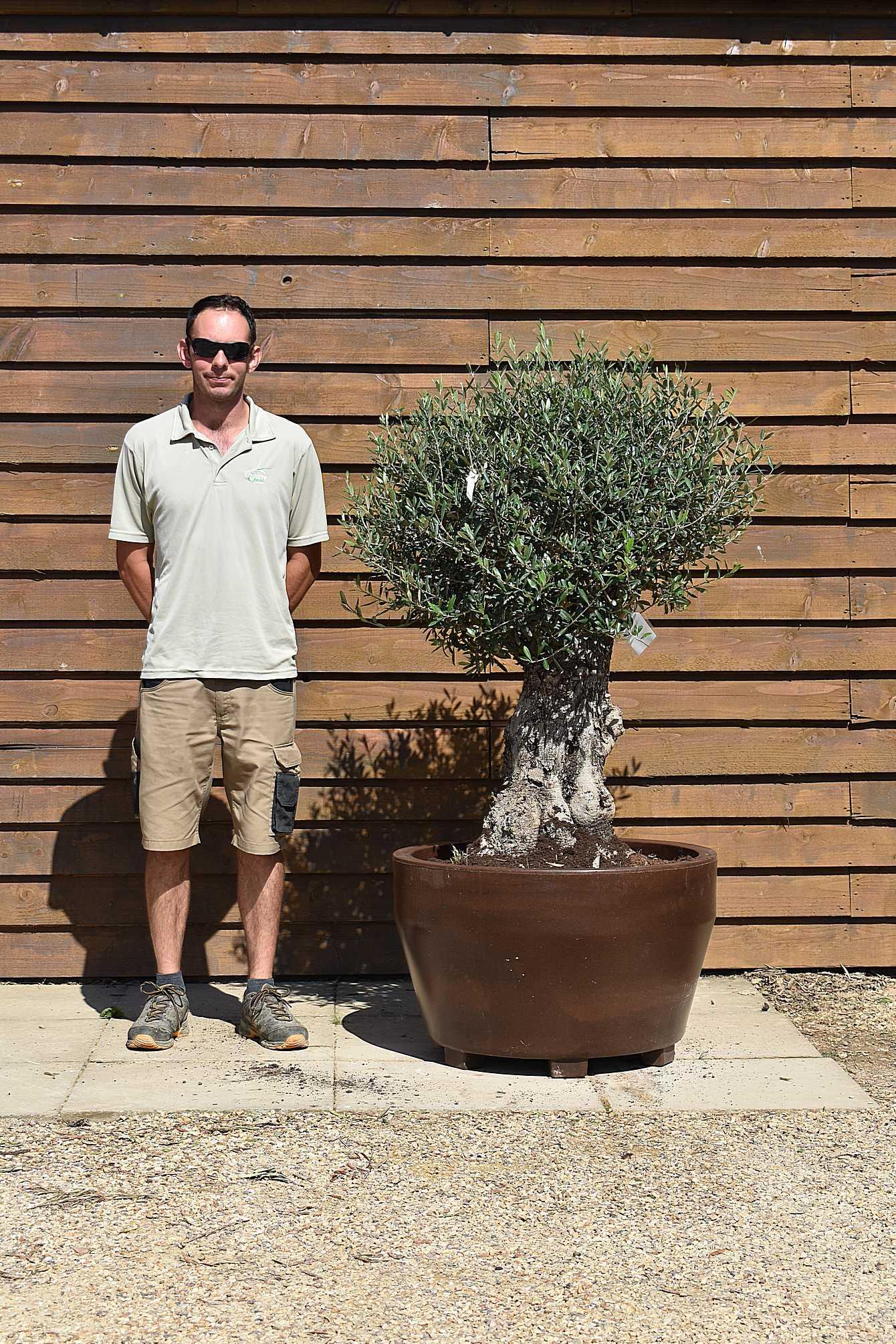 potted mushroom olive 573 (2)
