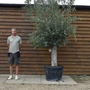 150lt bonsai 389 (1)