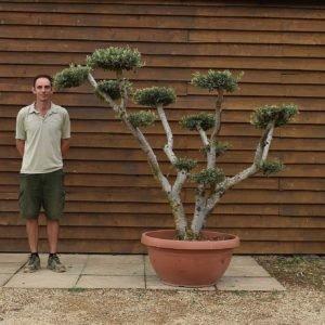 90cm bowl olive 649 (2)