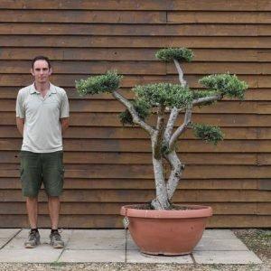 90cm bowl olive 652 (2)